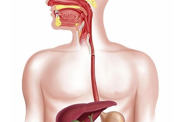 Папиллома пищевода: что это такое, методы лечения