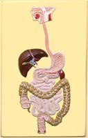 Железистый полип желудка - что это такое, причины и лечебная тактика