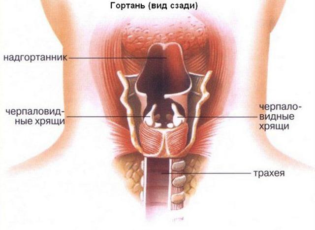 Папиллома в горле: симптомы, лечение и операция по удалению