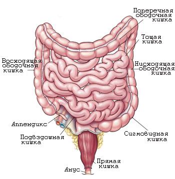 Ректальное кровотечение: причины, симптомы и методы лечения